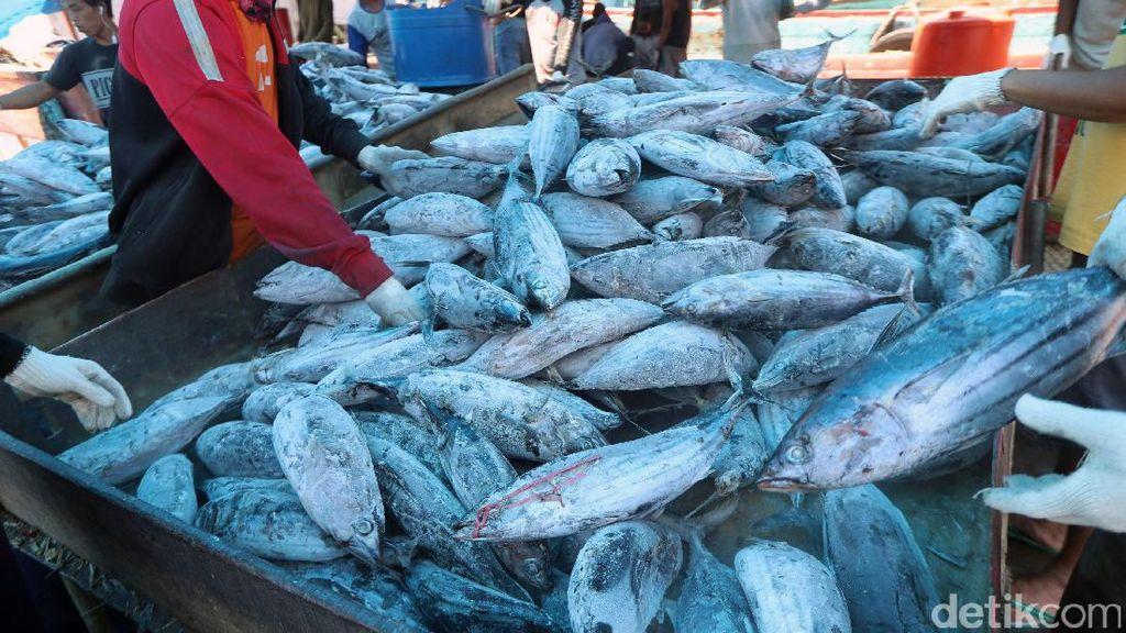 Dua BUMN Kerja Sama Dongkrak Produksi Ikan Nasional