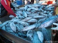 Ongkos Angkut Ikan Indonesia yang Mahal