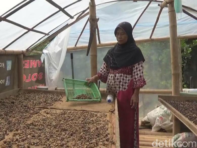 Ngopi di Warung Kopi Luwak Ini Bisa Juga Ngintip Proses Pembuatannya