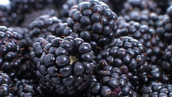 Buah dan sayuran dengan pigmen ungu alami memiliki zat antioksidan yang tinggi sehingga seseorang dianjurkan menambah makanan ini di menu hariannya.
