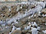 Jutaan Muslim Ibadah Wukuf di Padang Arafah