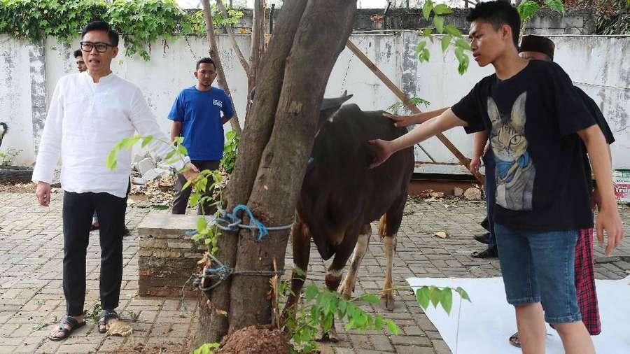 Eko Patrio Saksikan 4 Hewan Kurbannya Disembelih