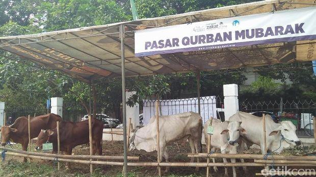 Masjid Al Azhar Bagikan Daging Kurban ke 2.000 Warga