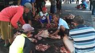 Cacing Hati di Hewan Kurban Juga Ditemukan di Situbondo