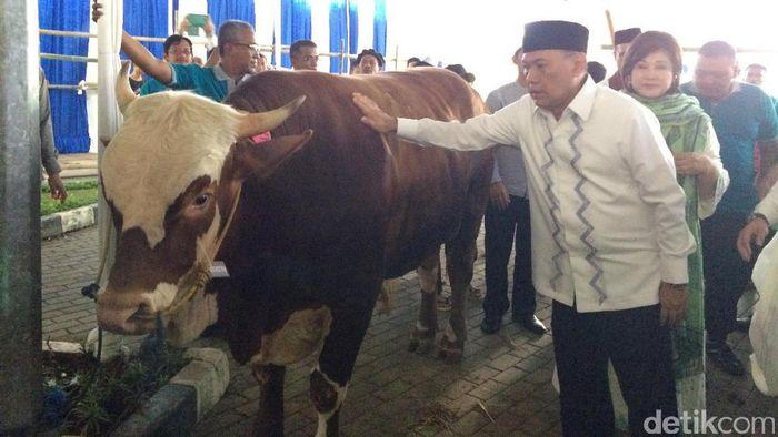 Sebelum diserahkan ke petugas untuk disembelih, Agus sempat mengelus-elus sapi limosin itu.