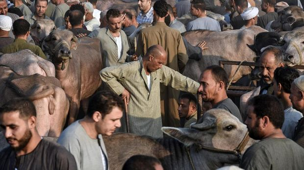 Para pedagang hewan kurban di Mesir mengeluhkan penjualan yang merosot drastis karena inflasi.