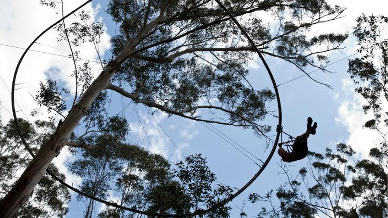 Foto: Gabungan roller coaster dengan flying fox di Australia (Dok. TreeTop Adventure Park)