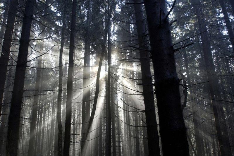 Black Forest juga biasa dikenal dengan Schwarzwald, yang terletak di Baden-Wurttemberg, bagian barat daya Jerman (BBC Travel)