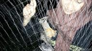 Peneliti Cari Keberadaan Kelelawar Raksasa di Aceh Besar