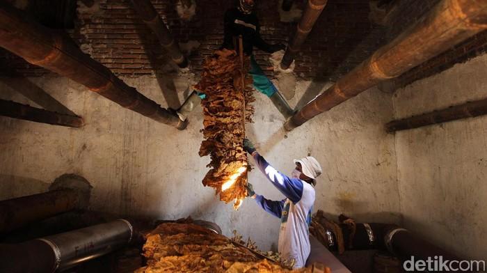Aktivitas petani tembakau di Training Farm PT Sadhana Arifnusa, mitra pemasok tembakau PT HM Sampoerna Tbk. di Desa Puyung, Kecamatan Jonggat Loteng, Lombok Tengah, NTB. Program kemitraan ini diharapkan menjadi solusi atas salah satu permasalahan tembakau di Indonesia, yaitu belum maksimalnya serapan tembakau lokal.