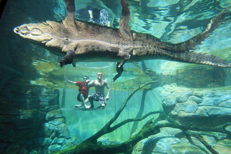 Berlokasi di Darwin, Crocosaurus Cove menjadi satu tempat rekreasi serba reptil. Malah ada wahana adrenalin super ngeri bernama Cage of Death (Crocosaurus Cove)