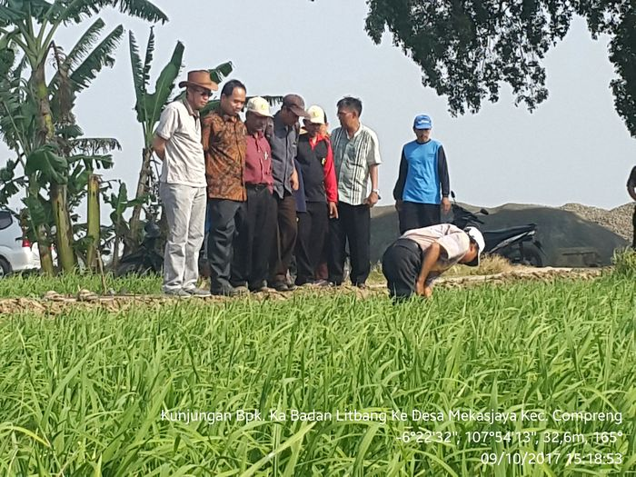 Foto: Wereng & Virus Kerdil di Subang di Bawah Ambang Batas (Dok. Kementan)