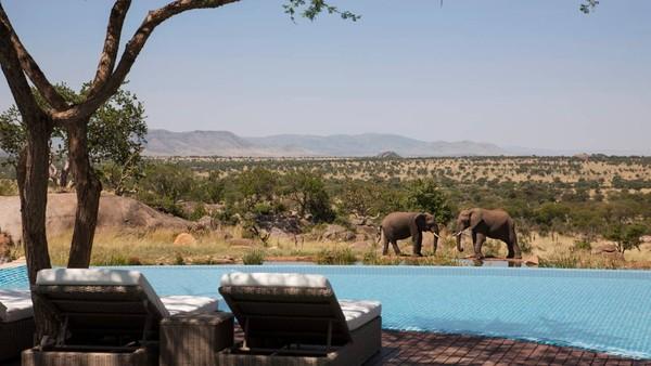 Kolam renang yang satu ini contohnya, pemandangannya langsung ke alam bebas yang banyak binatang liar seperti gajah, zebra hingga singa yang cantik (Four Seasons)