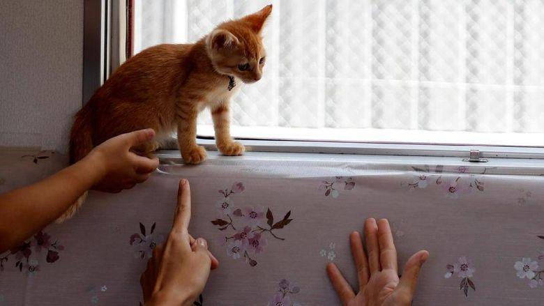 Naik Kereta Di Jepang Bisa Main Sama Kucing Kucing Lucu