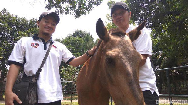 Kuda Chester kini dirawat dokter hewan /