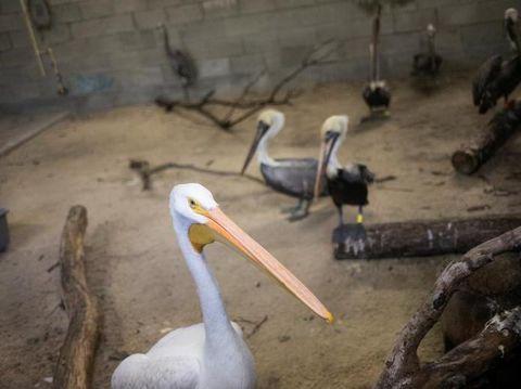 Ilustrasi kebun binatang/