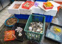5 Paket Ikan Fugu Beracun Terlanjur Terjual, Pemerintah Jepang Beri Peringatan Darurat