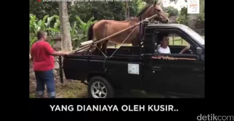 Chester, Nama Baru Kuda yang Pernah Dicambuk Meski Kelelahan