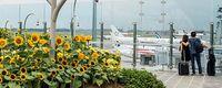 Ada taman bunga mataharinya (Changi Airport)