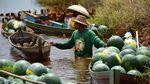 Foto: Keren! Petani Ini Panen Hasil Budidaya Semangka di Rawa