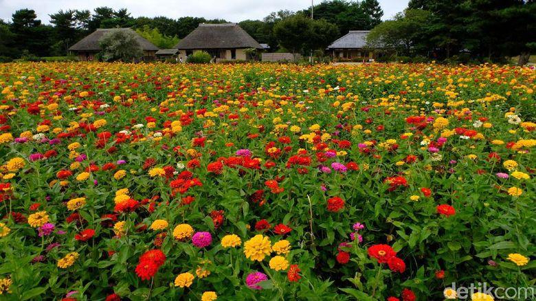 Banyak Aktivitas Seru Di Kebun Bunga Cantik Jepang Ini