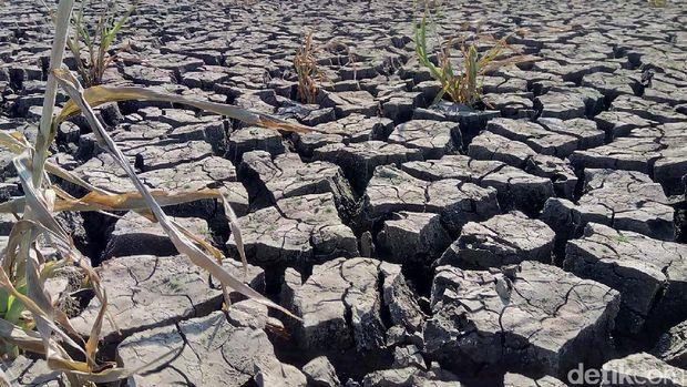 7 Kecamatan di Wonogiri Kekeringan, Diprediksi Sampai Oktober