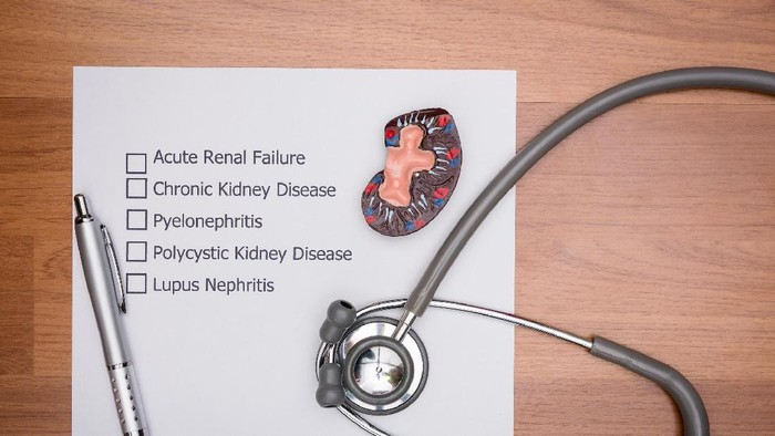 Ilustrasi kesehatan ginjal. Foto: Ilustrasi/thinkstock