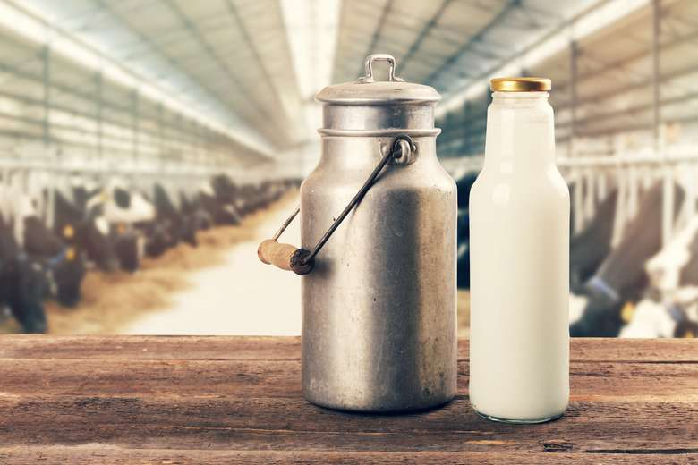 Untuk meningkatkan produksi susu biasanya sapi kerap disuntuk hormon. Akibatnya, tubuh mengalami ketidakseimbangan hormon yang menyebabkan masalah seperti tiroid. Hormon buatan sangat berbahaya dan asupannya harus segera dihentikan. Foto: Thinkstock