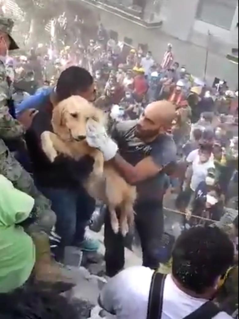 Momen Dramatis Penyelamatan Anjing dari Reruntuhan Gempa Meksiko