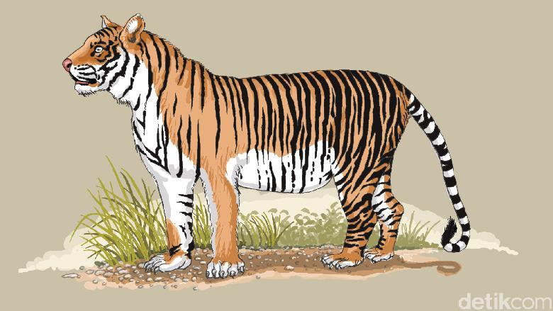 BKSDA Jambi Pasang Kamera Pemantau Lacak Harimau yang Serang Warga