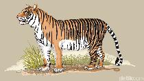 Penyelundupan Kulit Harimau di Jambi Digagalkan