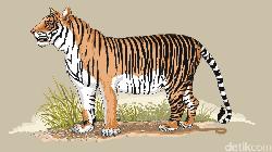 Harimau yang Lepas dari Jeratan Ditemukan Mati Tergantung