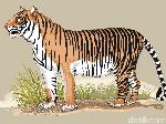 Harimau Sumatera Berhasil Bebaskan Diri dari Jeratan di Riau