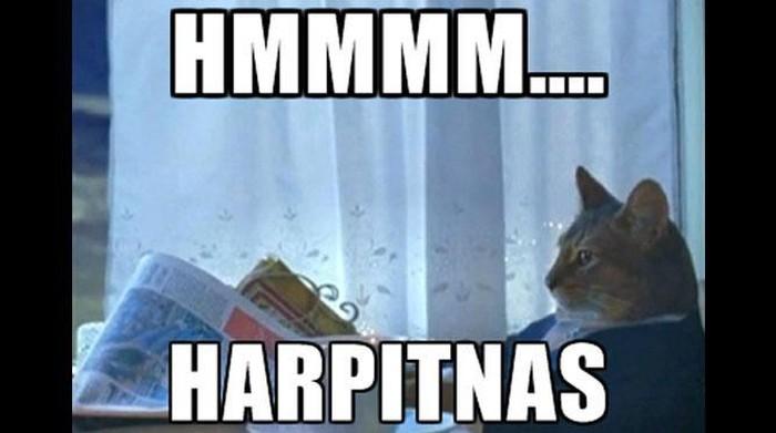 Harpitnas. Foto: internet