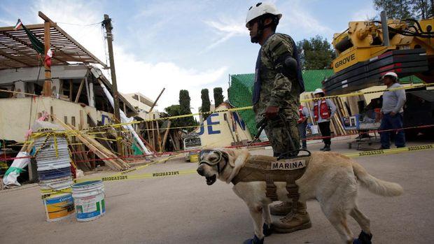 Aksi Frida saat bertugas mencari korban di reruntuhan gempa Meksiko