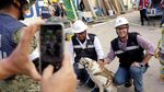 Ini Frida, Anjing yang Populer Jadi Ikon Penyelamat Gempa Meksiko