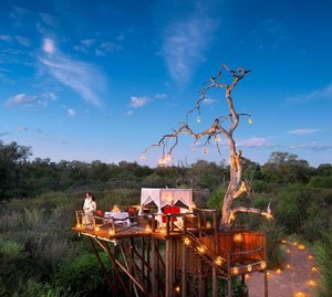 Foto: Menginap di Rumah Pohon Mewah Tanpa Atap