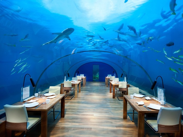 Ithaa Undersea Restaurant ini berada di 16 kaki dibawah dasar laut tepatnya di Conrad Maldives. Sambil menikmati makanan, Anda pun bisa melihat ikan hiu, paus hingga ikan laut kecil diatas kepala Anda. Wow, Amazing! Foto: Istimewa