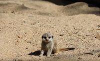 (National Zoo & Aquarium/Youtube)