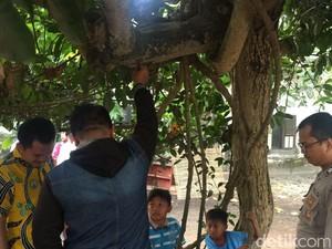 Seorang Kakek di Jember Gantung Diri di Pohon Waru