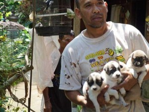 Relawan Jemput Anjing yang Ditinggalkan di Zona Merah Gunung Agung