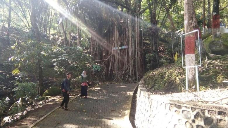Foto: Objek wisata Akar Seribu di Desa Plajan (Wikha Setiawan/detikTravel)