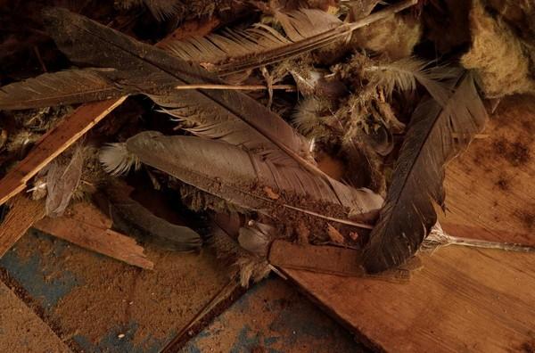 Helaian bulu burung merpati juga ditemukan di dalam terowongan. Rencananya setelah terowongan direstorasi, turis bisa menjelajahi dan berfoto-foto di dalamnya (Darrin Zammit Lupi/Reuters)