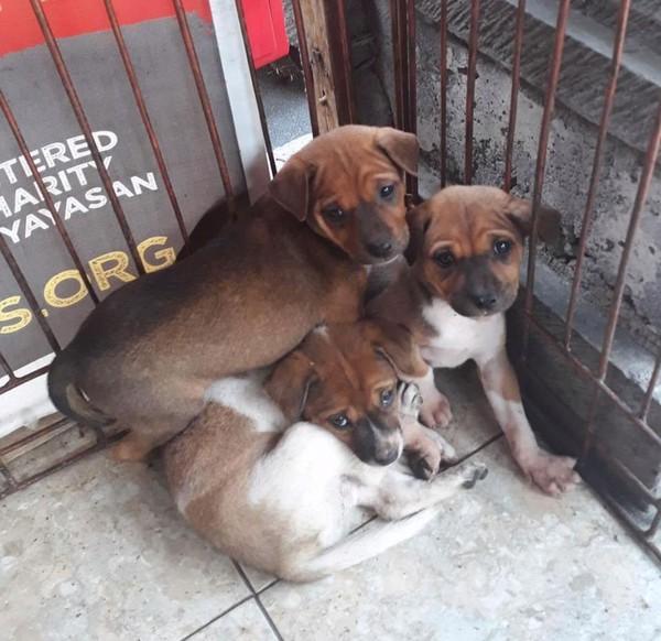 Tim ini terjun langsung ke pedesaan yang sudah ditinggalkan oleh warga (Bali Dog Adoption Rehabilitation Centre/Facebook)