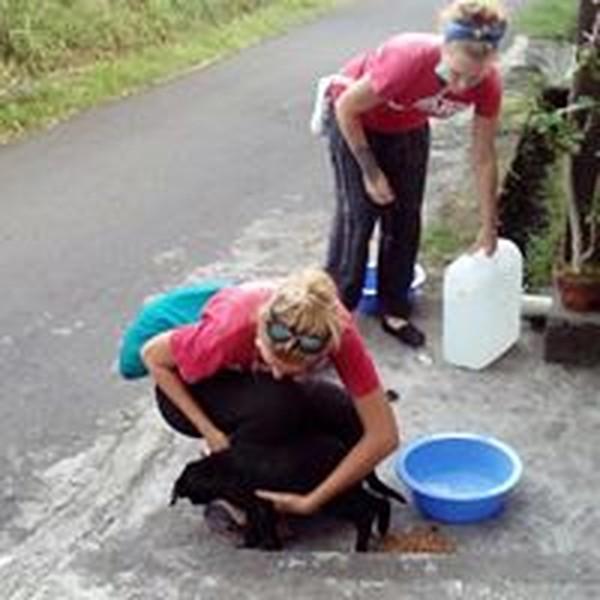 Sekitar 140.000 orang mengungsi ke pusat evakuasi ketika pihak berwenang di Bali menaikkan peringatan gunung berapi Gunung Agung ke tingkat awas. Hewan peliharaan ditinggalkan begitu saja (Bali Dog Adoption Rehabilitation Centre/Facebook)