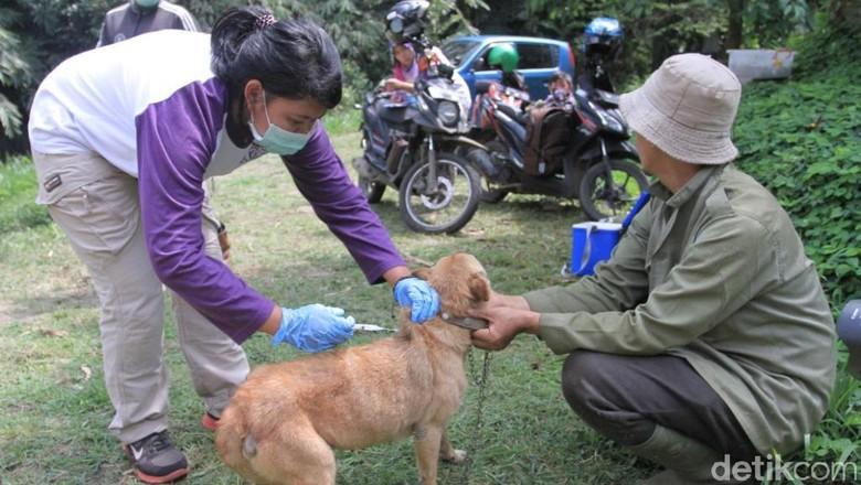 Pelihara Kucing atau Anjing, Bun? Ini 4 Cara Cegah Rabies / Foto: Wisma Putra