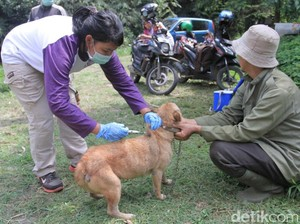 Ribuan Anjing dan Kucing di Kabupaten Bandung Disuntik Rabies