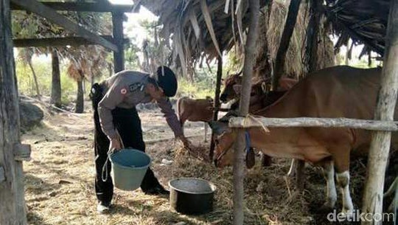 Kisah Polisi Jaga Rumah dan Ternak Pengungsi Gunung Agung
