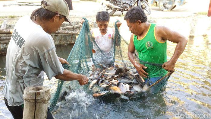Sungai Kotor jadi Tempat Budidaya Ikan