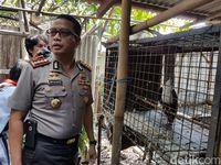 Ada elang bondol dan lutung jawa yang dipelihara LTO tanpa izin